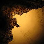 truffle_spore_under_microscope_150x150