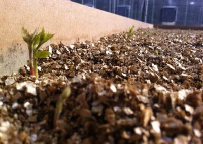 Plant Dev Photo 3