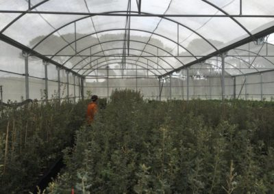 Plant Dev Photo 4