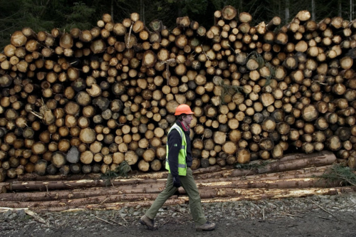 Martin Waddell: The dark side of Scottish forestry
