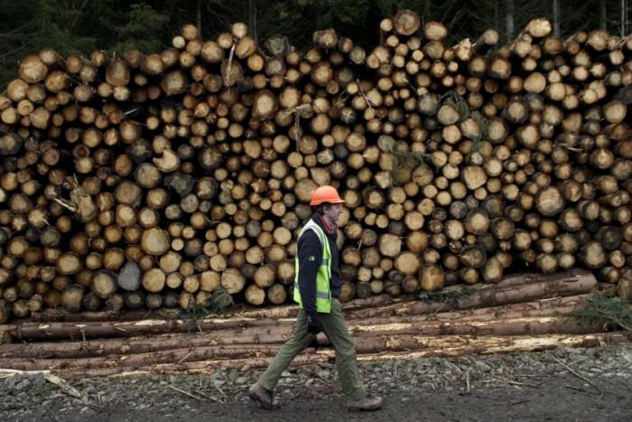 Martin Waddell: The dark side of Scottish forestry