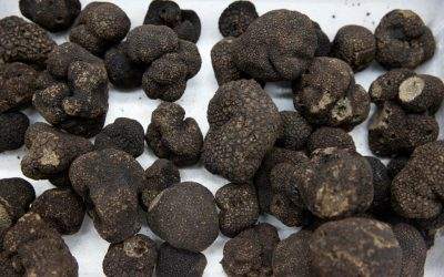 Foodies lament soaring price of black truffles in France