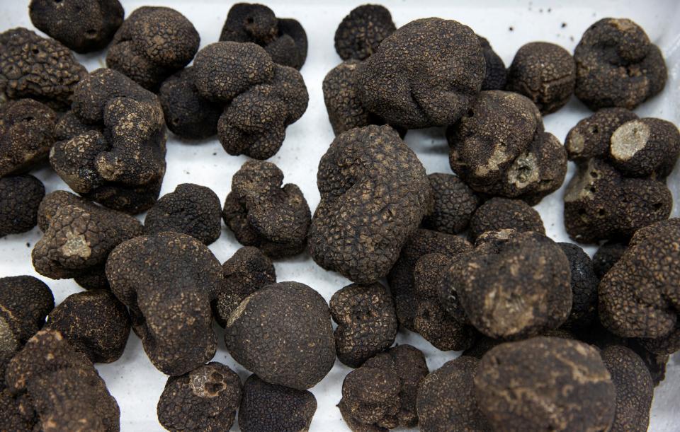 Foodies lament soaring price of black truffles in France