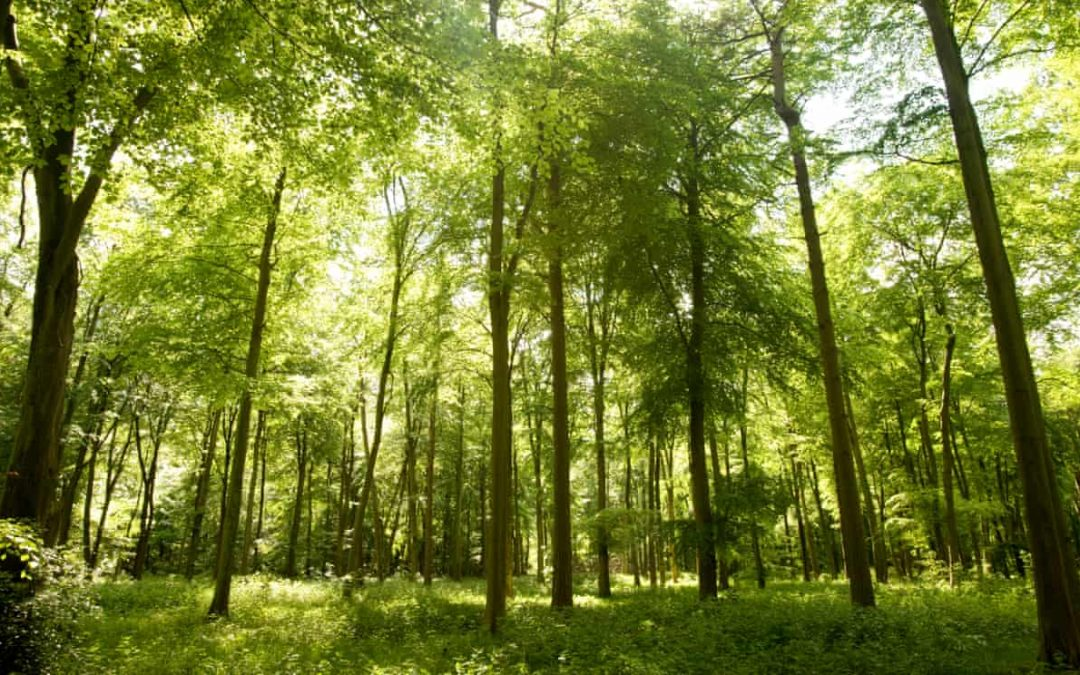 £60m 'greenery drive' to plant 10m trees in England