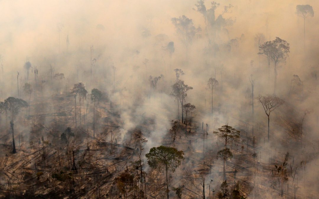 Brazil records worst annual deforestation for a decade