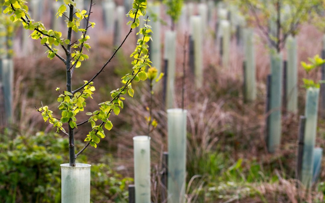 Tree planting in UK 'must double to tackle climate change'