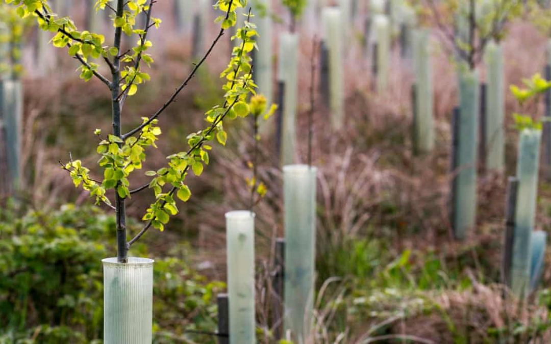 130,000 trees to be planted in English cities and towns